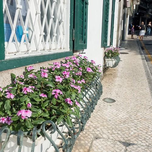 花が似合うマカオの街